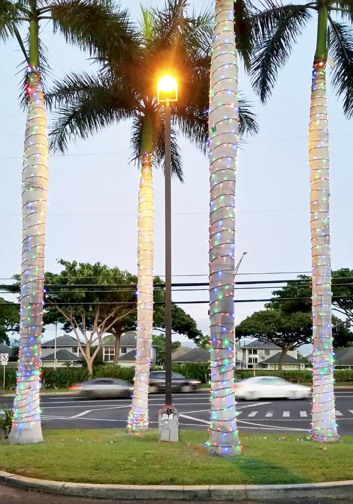 2015 CFS Tree Lighting